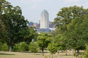 Raleigh and Trees